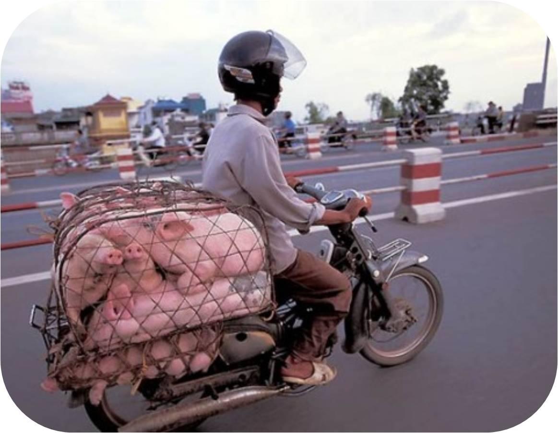 Смотреть ролики про въетнамок 25 фотография